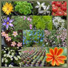 Alpines rockery plants mail order wholesale UK grower Lincolnshire