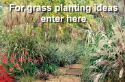 Ornamental Grasses UK grower Lincolnshire mail order wholesale